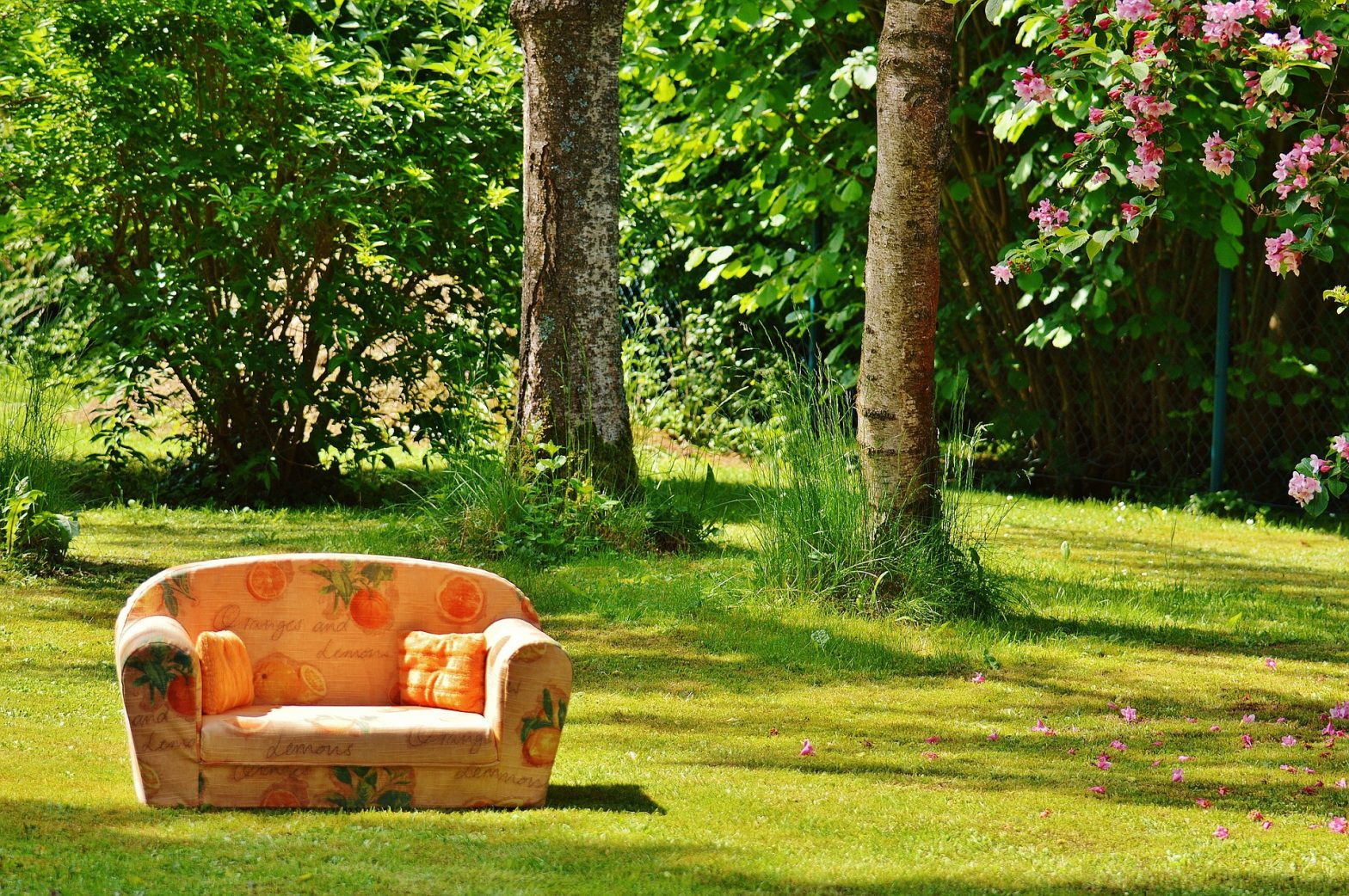 Sofa in woods