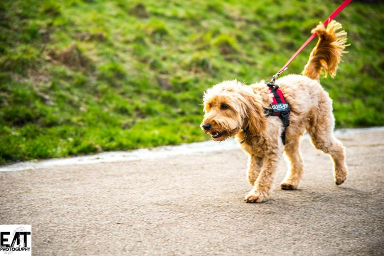 Dogs as running buddies