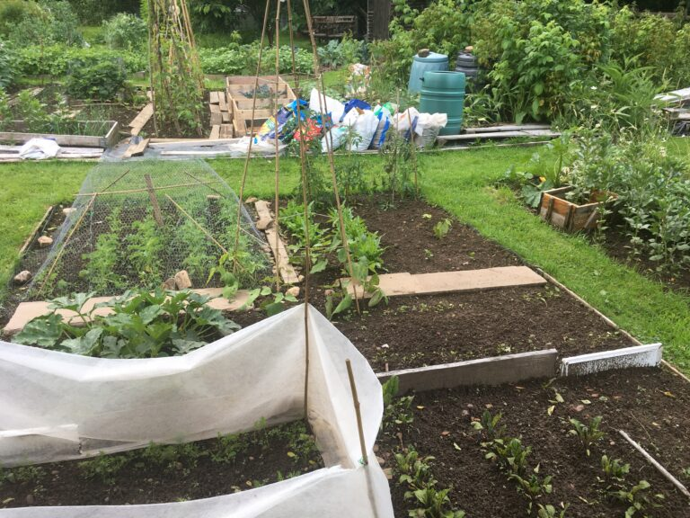 Project Allotment – an update