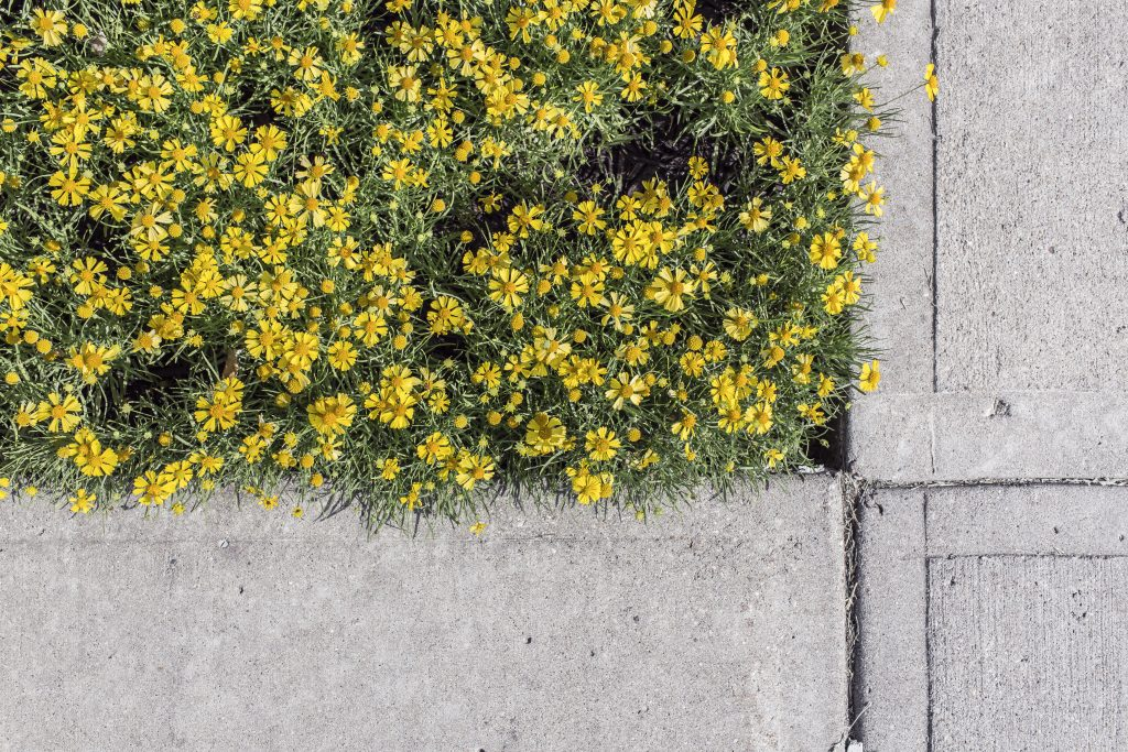 Flowers in pavement